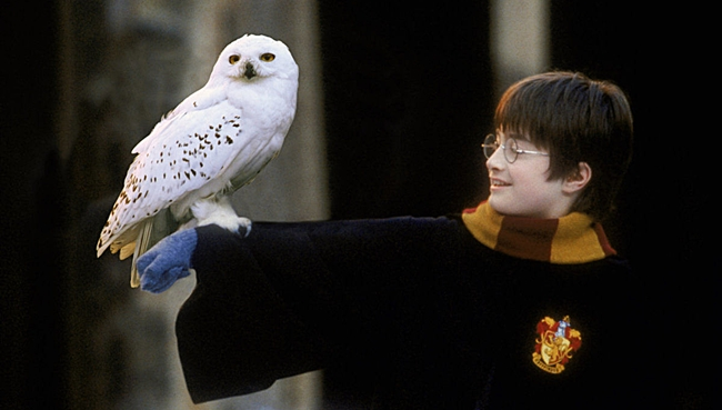 hedwig-harry-potter