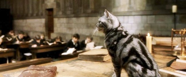 mcgonagall_cat_by_imnotanalien-d4ux1y3