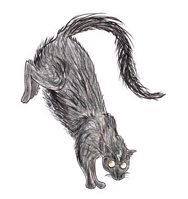 harry-cat
